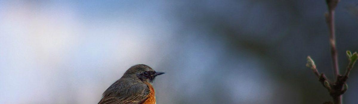 Birds From Around the World